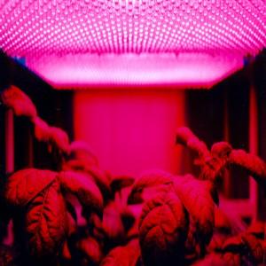 Global LED Grow Lights Market