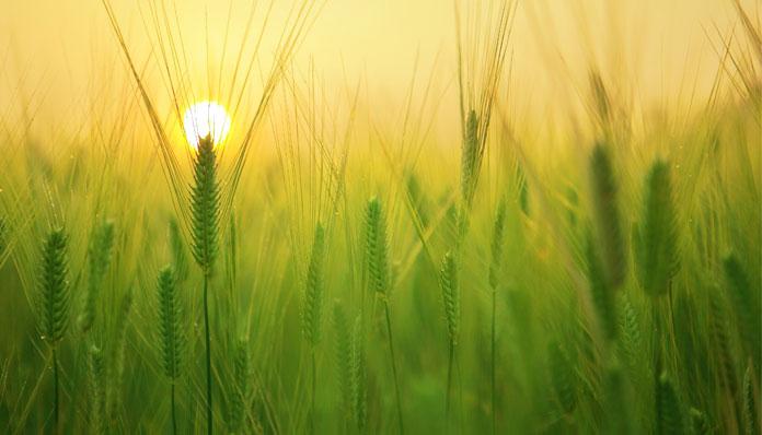 Agriculture & Food Market